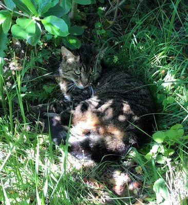 Oglądasz obrazki z tematu: Szary kot znaleziony w Sowlanach