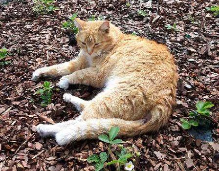 Oglądasz obrazki z tematu: Rudy kot zaginał na Sybiraków