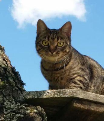 Oglądasz obrazki z tematu: Szara kotka zaginęła na Zwycięstwa