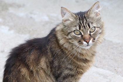 Oglądasz obrazki z tematu: Szara puchata kotka zaginęła na ul. Baranowickiej