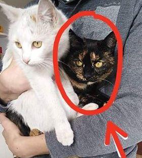 Oglądasz obrazki z tematu: Kotka tricolor zaginęła w Fastach