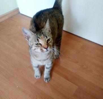 Oglądasz obrazki z tematu: Szara kotka z  ul. Litewskiej wróciła do domu