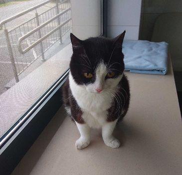 Oglądasz obrazki z tematu: Biało czarna kotka z ul. PIetkiewicza wróciła do domu :)