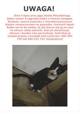 Oglądasz obrazki z tematu: Czarno biała kotka zaginęła na ul. Piłsudskiegoo