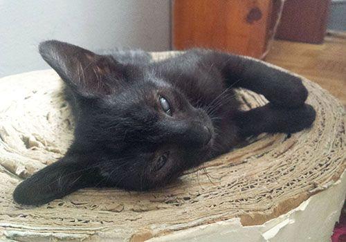 Oglądasz obrazki z tematu: Chciałabym być ładnym kotkiem