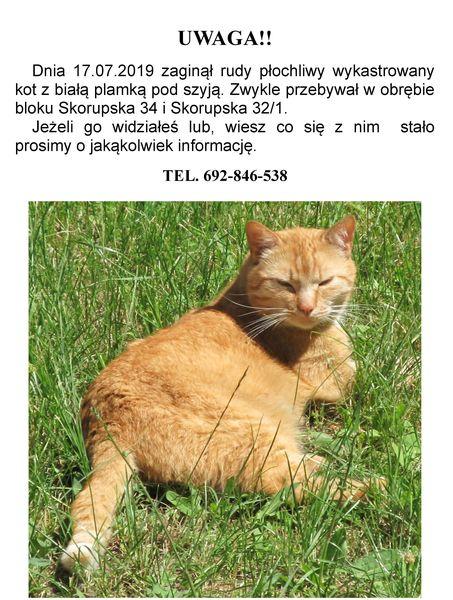 Oglądasz obrazki z tematu: Rudy kot zaginął na ul. Skorupskiej