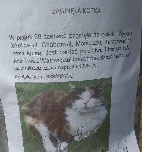 Oglądasz obrazki z tematu: Puchata kotka tricolor zaginęła na Wygodzie
