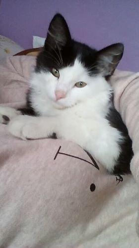 Oglądasz obrazki z tematu: Biało czarny puchaty kot zaginał w okolicy Giełdy na Andersa