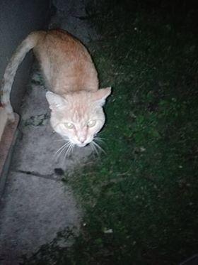 Oglądasz obrazki z tematu: Rudy kot błąka się po Jurowieckiej