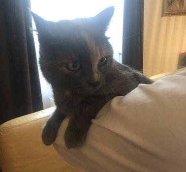Oglądasz obrazki z tematu:  Szaro niebieska kotka z rudym na nosku została znaleziona na 42 Pułku