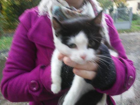 Oglądasz obrazki z tematu: Biało czarny kotek z obrożą znaleziony na Suchowolca