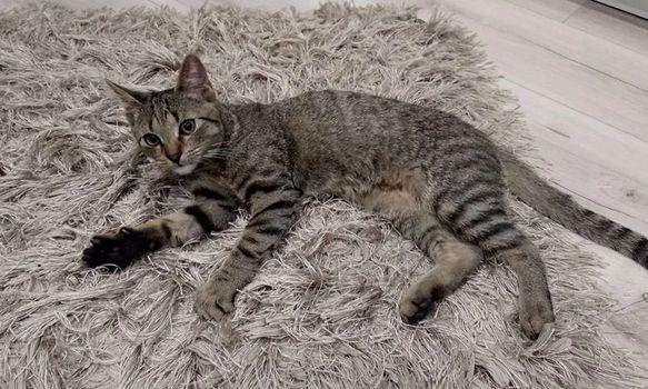 Oglądasz obrazki z tematu: Szary kotek znaleziony na ul. Kopernika