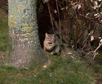 Oglądasz obrazki z tematu: Szary kot błąka się po Swobodnej