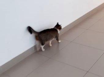 Oglądasz obrazki z tematu: Szaro biały kot błąka się po ul. Tysiąclecia