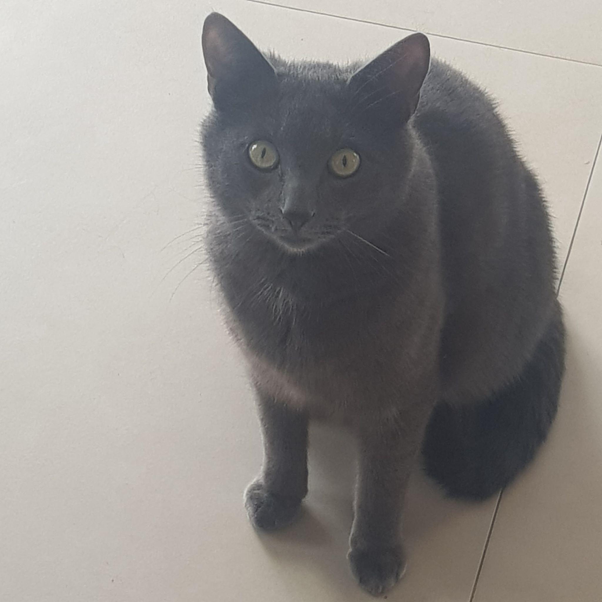 Oglądasz obrazki z tematu: Niebieski kot z ul. Akacjowej odnaleziony