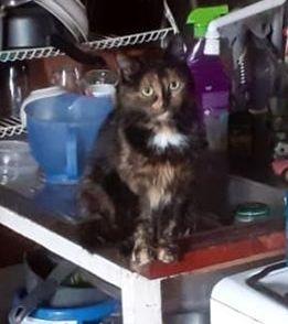 Oglądasz obrazki z tematu: Kotka szylkretka zaginęła w Wasilkowie