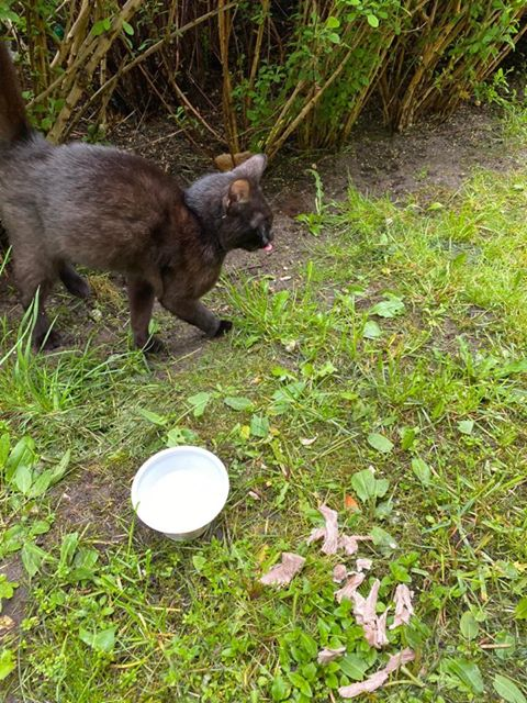 Oglądasz obrazki z tematu: Czarny kotek/kotka błąka się po Kleosinie