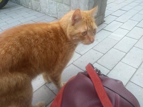Oglądasz obrazki z tematu: Rudy kot z Plażowej wrócił do domu :)