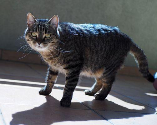 Oglądasz obrazki z tematu: Szara kotka zaginęła na Prowiantowej