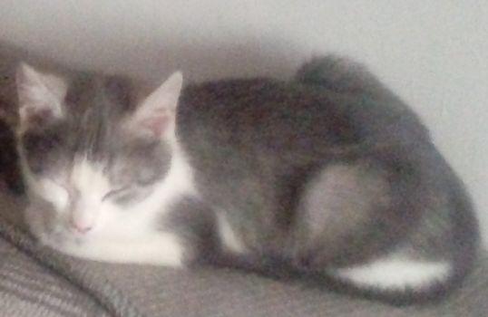 Oglądasz obrazki z tematu: Niebiesko biały kot zaginął na ul. Stromej