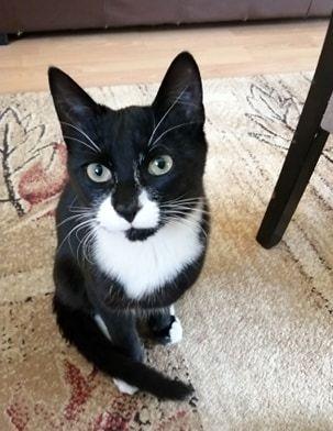 Oglądasz obrazki z tematu: Czarno biały kot zaginął na ul Makowej