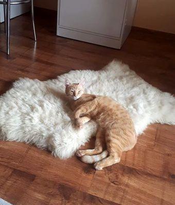 Oglądasz obrazki z tematu: Rudy kotek zaginął na ul. Boboli