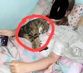 Oglądasz obrazki z tematu: Szara pręgowana kotka z  Młynowej odnaleziona