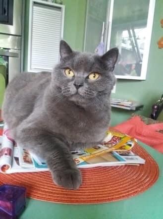 Oglądasz obrazki z tematu: Niebieski kot z ul. Niedźwiedziej odnaleziony