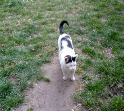 Oglądasz obrazki z tematu: Biało czarna kotka z al. Piłsudskiego