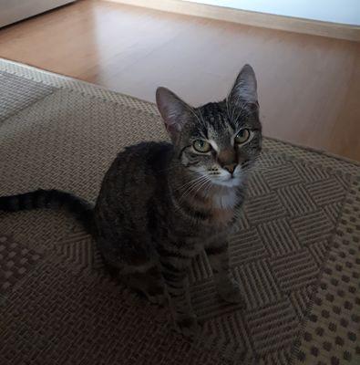 Oglądasz obrazki z tematu: Szary kot znaleziony na św Wojciecha