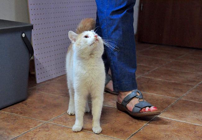 Oglądasz obrazki z tematu: W Domach Tymczasowych Kotkowa Czekają na Ciebie: