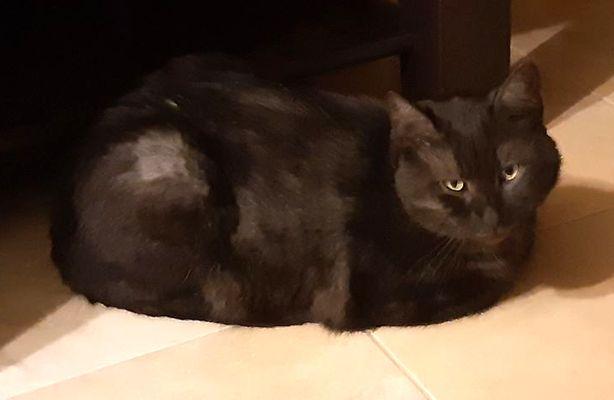 Oglądasz obrazki z tematu: Dymny kot zaginął na ul. Czeskiej