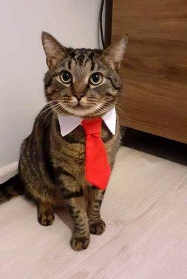 Oglądasz obrazki z tematu: Szary pręgowany kot zaginął na ul. Mieszka I
