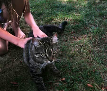 Oglądasz obrazki z tematu: Szary kot/kotka błąka się na działkach pod Wasilkowem
