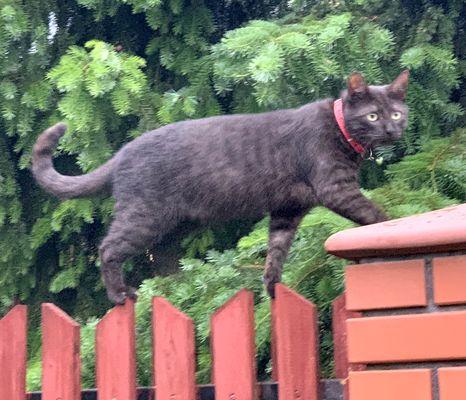 Oglądasz obrazki z tematu: Czarno dymny kot zaginął na Kołłątaja