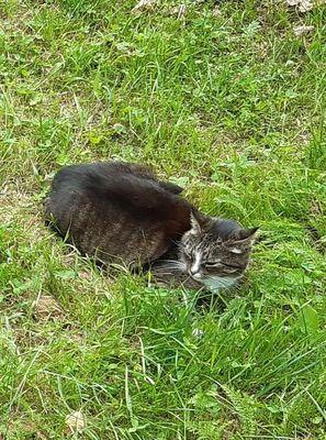 Oglądasz obrazki z tematu: Szaro biała kotka zaginęła w Krupnikach