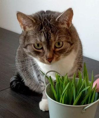 Oglądasz obrazki z tematu: Szaro biała kotka zaginęła na ul. Popiełuszki