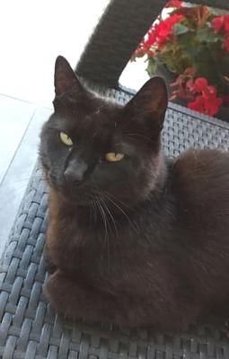 Oglądasz obrazki z tematu: Czarna kotka zaginęła w Sowlanach