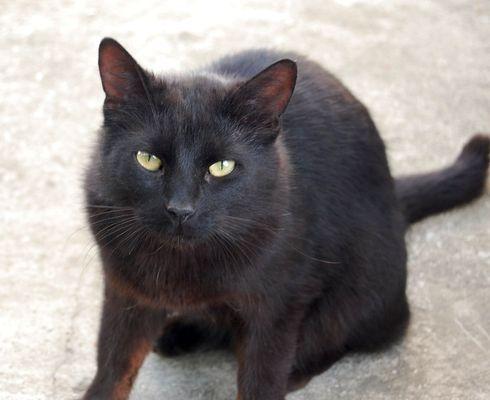 Oglądasz obrazki z tematu: CZarny kot zaginął na ul. Strażackiej