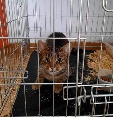 Oglądasz obrazki z tematu: Szara kotka znaleziona koło Biedroki na Antoniuku Fabrycznym