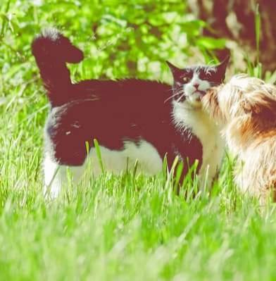 Oglądasz obrazki z tematu: Czarno biała kotka zaginełą na ul. Czystej