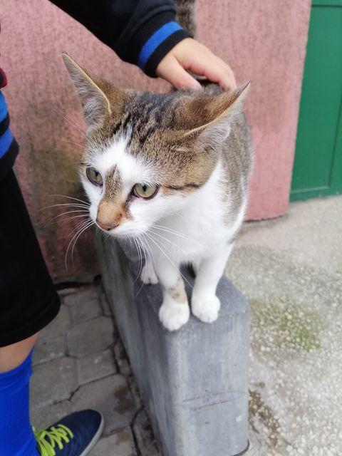 Oglądasz obrazki z tematu: Biało szary kotek znaleziony ul. Św Jerzego i Duboisa