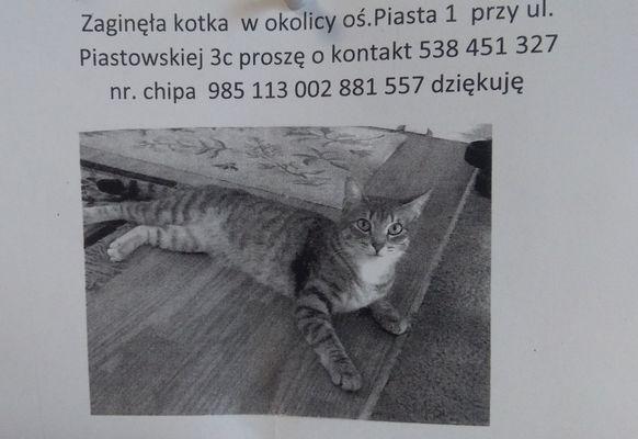 Oglądasz obrazki z tematu: Biało szara kotka zaginęła na os. Piasta
