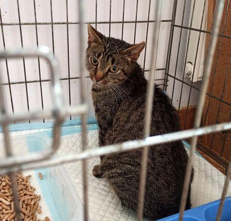 Oglądasz obrazki z tematu: Szara kotka znaleziona na ul. Piotrkowskiej
