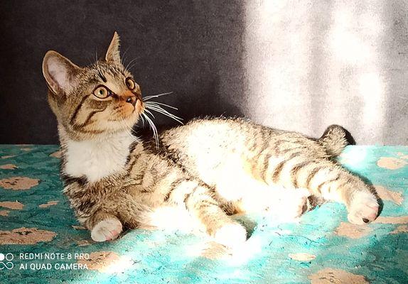 Oglądasz obrazki z tematu: Szara kotka znaleziona w Sobolewie