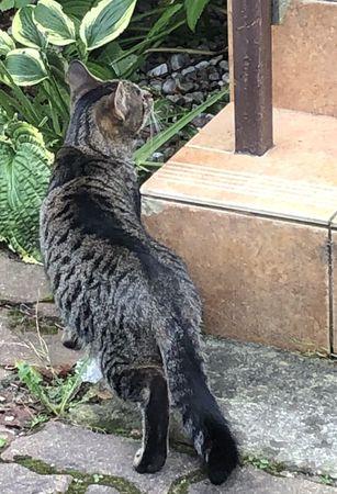 Oglądasz obrazki z tematu: Szary pręgowany kotek ze Starosielc wrócił do domu