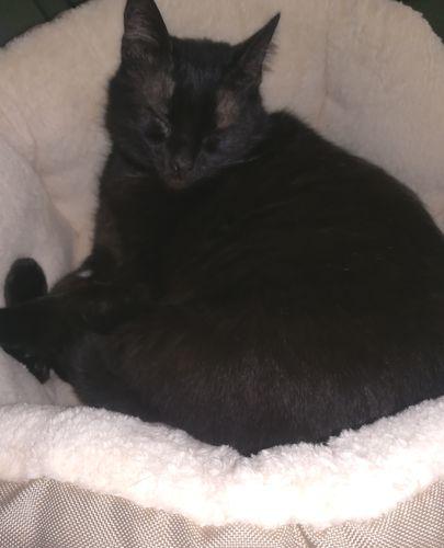 Oglądasz obrazki z tematu: Czarna kotka znaleziona na ul. Antoniukowskiej