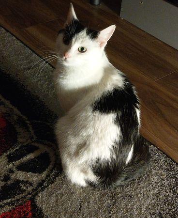 Oglądasz obrazki z tematu: Biało czarna kotka znaleziona na ul. Blokowej