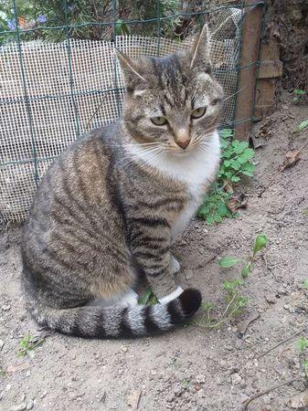 Oglądasz obrazki z tematu: Szaro biała kotka zaginęła na ul. Bohaterów Monte Cassino/ Wyszyńskiego