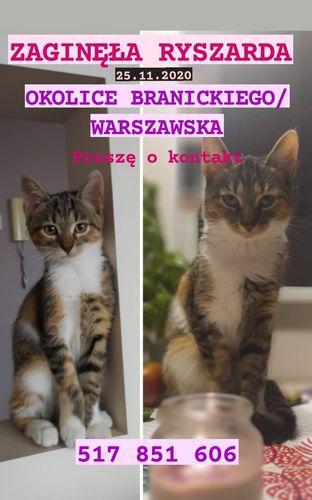 Oglądasz obrazki z tematu: W okolicy Branickiego/Warszawska zaginęła szaro biala kotka
